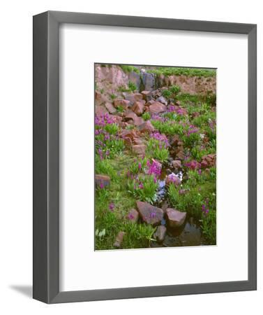 Colorado, San Juan National Forest-John Barger-Framed Photographic Print
