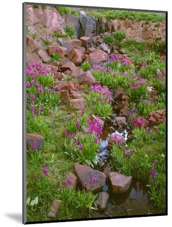 Colorado, San Juan National Forest-John Barger-Mounted Photographic Print
