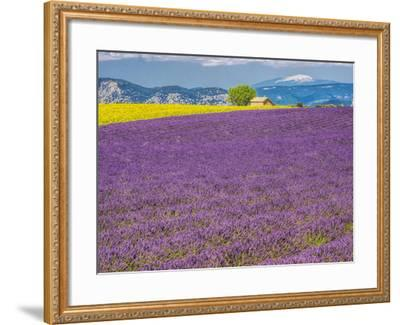 France, Provence, Old Farm House in Field of Lavender and Sunflowers-Terry Eggers-Framed Photographic Print
