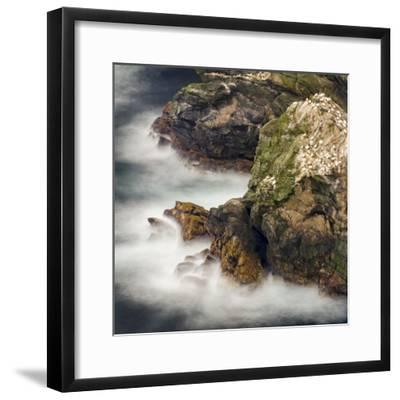 Shetland Islands, Hermaness National Nature Reserve on the Island Unst. Colony of Northern Gannet-Martin Zwick-Framed Photographic Print