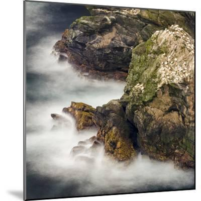 Shetland Islands, Hermaness National Nature Reserve on the Island Unst. Colony of Northern Gannet-Martin Zwick-Mounted Photographic Print