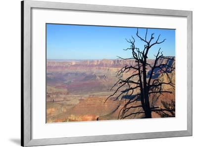 USA, Arizona, Grand Canyon. the Grand Canyon, View from the South Rim-Kymri Wilt-Framed Photographic Print