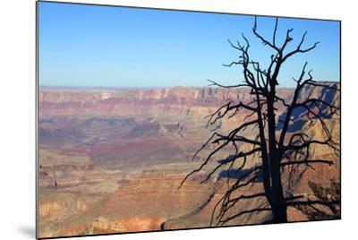 USA, Arizona, Grand Canyon. the Grand Canyon, View from the South Rim-Kymri Wilt-Mounted Photographic Print