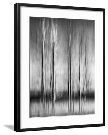 USA, California, Lake Tahoe, Abstract of Bare Aspen Trees and Snow at Carnelian Bay-Ann Collins-Framed Photographic Print