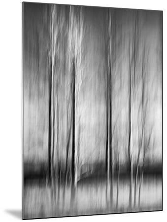 USA, California, Lake Tahoe, Abstract of Bare Aspen Trees and Snow at Carnelian Bay-Ann Collins-Mounted Photographic Print