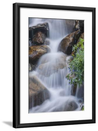 USA, Colorado, Clear Creek County. Close-Up of Cascade and Chiming Bells Flowers-Jaynes Gallery-Framed Photographic Print