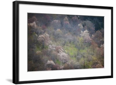 USA, North Carolina. Hardwood Trees Blooming in Spring-Jaynes Gallery-Framed Photographic Print