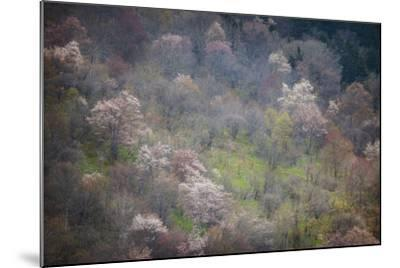 USA, North Carolina. Hardwood Trees Blooming in Spring-Jaynes Gallery-Mounted Photographic Print