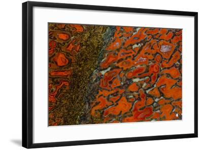 Dinosaur Petrified Bone-Darrell Gulin-Framed Photographic Print