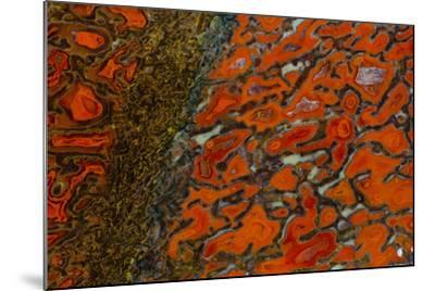 Dinosaur Petrified Bone-Darrell Gulin-Mounted Photographic Print