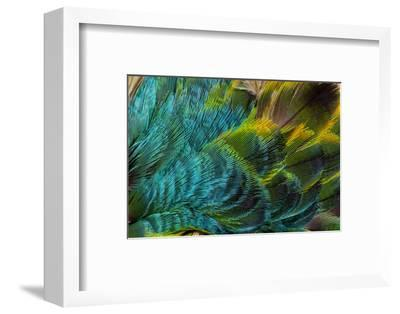 Feather Design-Darrell Gulin-Framed Photographic Print