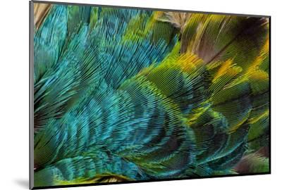 Feather Design-Darrell Gulin-Mounted Photographic Print