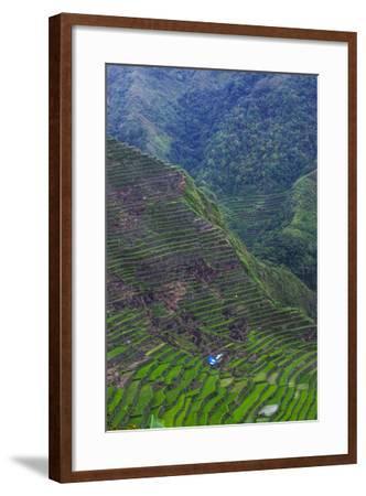 Batad Rice Terraces, Banaue, Luzon, Philippines-Michael Runkel-Framed Photographic Print