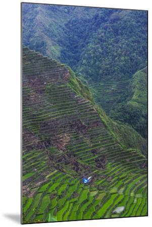 Batad Rice Terraces, Banaue, Luzon, Philippines-Michael Runkel-Mounted Photographic Print