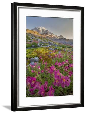 Washington, Lewis's Monkeyflower Along Panorama Trail and Paradise River, Mt. Rainier National Park-Gary Luhm-Framed Photographic Print