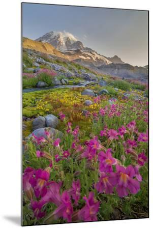 Washington, Lewis's Monkeyflower Along Panorama Trail and Paradise River, Mt. Rainier National Park-Gary Luhm-Mounted Photographic Print