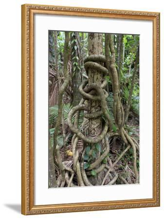 Cairns, Queensland, Australia-Paul Dymond-Framed Photographic Print