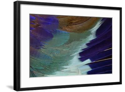 Lilac Breasted Roller Feathers Pattern-Darrell Gulin-Framed Photographic Print