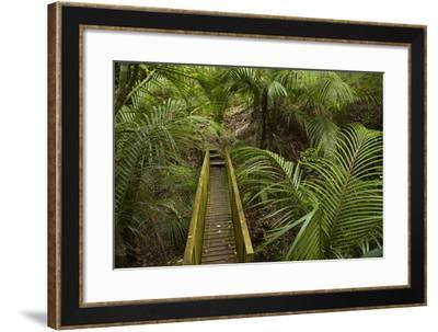 Nikau Palms and Footbridge at Parry Kauri Park, Warkworth, Auckland Region, North Island-David Wall-Framed Photographic Print