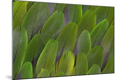 Green Wing Feathers of a Parrot-Darrell Gulin-Mounted Photographic Print