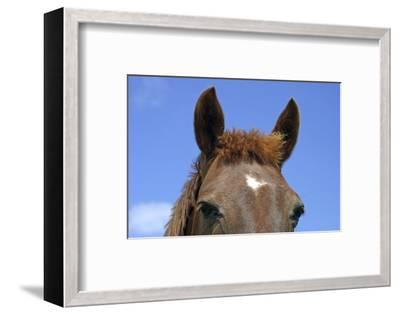 Ireland. Close-Up of Horse Face-Kymri Wilt-Framed Photographic Print