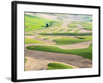 Washington, Whitman County. Aerial Photography in the Palouse Region of Eastern Washington-Julie Eggers-Framed Photographic Print