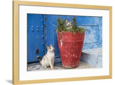 Morocco, Rabat, Sale, Kasbah Des Oudaias, Cats Hanging Out by a Potted Plant-Emily Wilson-Framed Photographic Print