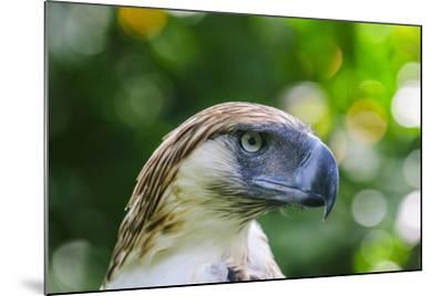 Philippine Eagle, Davao, Mindanao, Philippines-Michael Runkel-Mounted Photographic Print