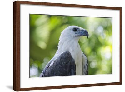 Philippine Eagle, Davao, Mindanao, Philippines-Michael Runkel-Framed Photographic Print