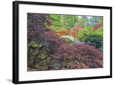 Seattle, Kubota Gardens, Spring Flowers and Japanese Maple with Moon Bridge in Reflection-Terry Eggers-Framed Photographic Print