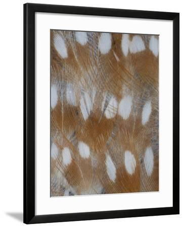 Zebra Finch Feathers of a Fawn Mutation in Coloration-Darrell Gulin-Framed Photographic Print