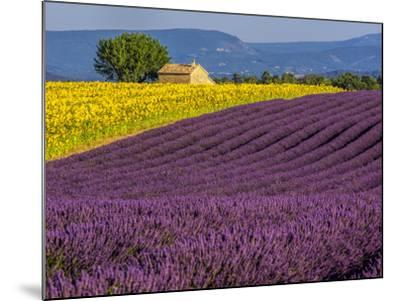France, Provence, Old Farm House in Field of Lavender and Sunflowers-Terry Eggers-Mounted Photographic Print