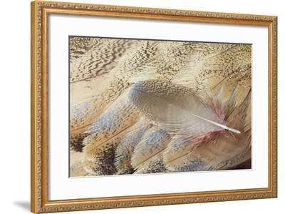 Wing Feathers of Senegal Bustard-Darrell Gulin-Framed Photographic Print