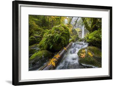 USA, Oregon. View from Below Elowah Falls on Mccord Creek in Autumn in the Columbia Gorge-Gary Luhm-Framed Photographic Print