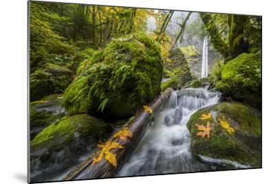USA, Oregon. View from Below Elowah Falls on Mccord Creek in Autumn in the Columbia Gorge-Gary Luhm-Mounted Photographic Print