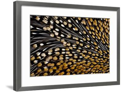 Jungle Cock Feathers-Darrell Gulin-Framed Photographic Print