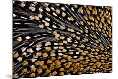 Jungle Cock Feathers-Darrell Gulin-Mounted Photographic Print