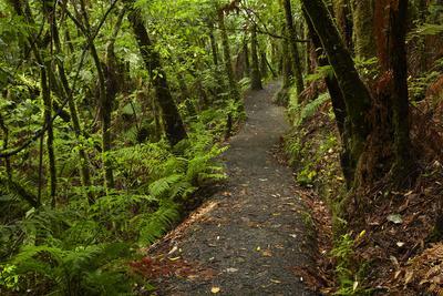 Hunua Falls Loop Track, Hunua Rabges, Auckland, North Island, New Zealand-David Wall-Framed Photographic Print