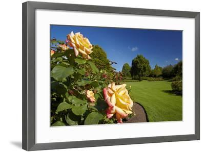 Roses in an Elegant Garden, Waikato, North Island, New Zealand-David Wall-Framed Photographic Print