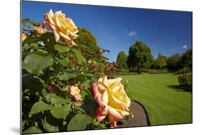 Roses in an Elegant Garden, Waikato, North Island, New Zealand-David Wall-Mounted Photographic Print