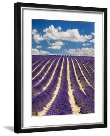 France, Provence, Lavender Field on the Valensole Plateau-Terry Eggers-Framed Photographic Print
