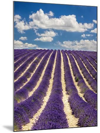 France, Provence, Lavender Field on the Valensole Plateau-Terry Eggers-Mounted Photographic Print