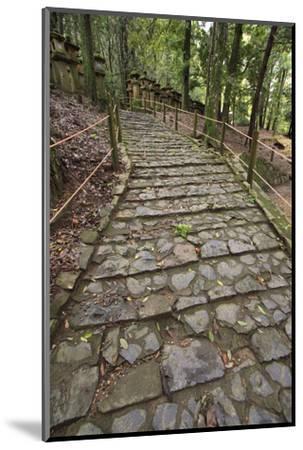 A Cobble Stone Path Leading Through the Grounds of Kasuga Taisha Shrine in Nara, Japan-Paul Dymond-Mounted Photographic Print