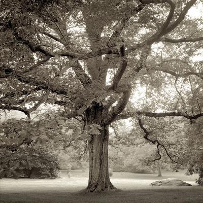 Hampton Maple I-Alan Blaustein-Framed Photographic Print