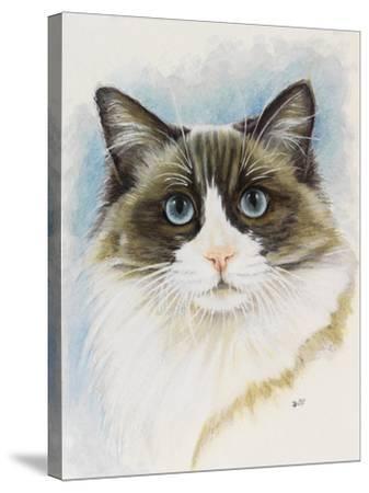 Ragdoll-Barbara Keith-Stretched Canvas Print