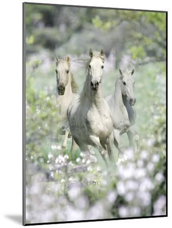 Dream Horses 074-Bob Langrish-Mounted Photographic Print