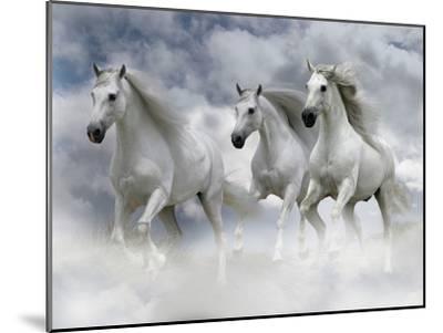 Dream Horses 087-Bob Langrish-Mounted Premium Photographic Print