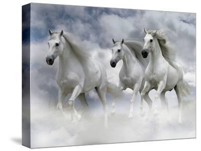 Dream Horses 087-Bob Langrish-Stretched Canvas Print