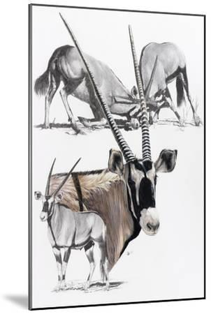 Gemsbok-Barbara Keith-Mounted Giclee Print