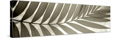 Florison 98-Alan Blaustein-Stretched Canvas Print